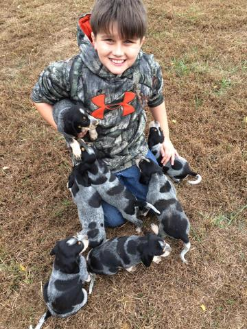 Hunter and a litter of pups off of Max and Crush